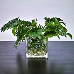 """CYS EXCEL 6"""" Square Glass Vase - 6 Inch Clear Cube Centerpie"""